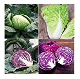 David's Garden Seeds Collection Set Cabbage Open Pollinated SL657 (Multi) 4 Varieties 600 Seeds (Non-GMO, Open Pollinated, Heirloom, Organic) Photo, bestseller 2019-2018 new, best price $19.95 review