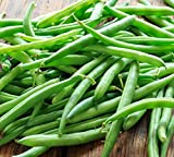 Blue Lake Bush Green Bean Seeds, 50+ Premium Heirloom Seeds, On Sale, (Isla's Garden Seeds), Non Gmo Organic, 90% Germination Rates, 100% Pure, Highest Quality Seeds Photo, bestseller 2019-2018 new, best price $5.99 review