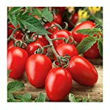 Organic Roma Tomato Seeds, 300+ Premium Heirloom Seeds!, 1 Selling Tomato Hot Pick & ON SALE!, (Isla's Garden Seeds), Non Gmo Organic, 85% Germination, Highest Quality Seeds, 100% Pure Photo, bestseller 2019-2018 new, best price $5.59 review