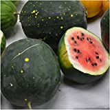 Package of 20 Seeds, Watermelon Van Doren Moon & Stars (Citrullus lanatus) Non-GMO Seeds By Seed Needs Photo, bestseller 2018-2017 new, best price $3.65 review