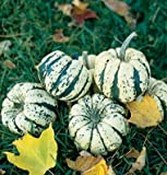 David's Garden Seeds Squash Winter Sweet Dumpling D681WP (Multi) 50 Open Pollinated Seeds Photo, bestseller 2018-2017 new, best price $8.45 review