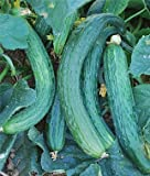 Heirloom Suyo Long Cucumber Seed by Stonysoil Seed Company CERTIFIED ORGANIC SEEDS Photo, bestseller 2018-2017 new, best price $7.95 review