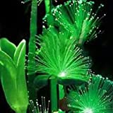 100Pcs Emerald Fluorescent Flower Seeds, Easy Grow Rare Emerald Flower Seeds Night Light Emitting Plants for Garden Decoration Photo, bestseller 2018-2017 new, best price $1.44 review