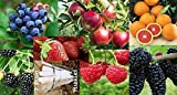 New Fruit Combo Pack Raspberry, Blackberry, Blueberry, Strawberry, Apple, Mulberry, Orange (Organic) 590+ Seeds UPC 650327337510 Self Fertile + 7 Free Plant Marker Survival Seeds Photo, bestseller 2018-2017 new, best price $7.99 review