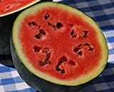 50+ Sugar Baby Watermelon Seeds- Heirloom, Non-GMO, Open-Pollinated by Ohio Heirloom Seeds Photo, bestseller 2017-2016 new, best price $2.19 review