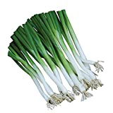 Burpee Parade Scallion Onion Seeds 1500 seeds Photo, bestseller 2018-2017 new, best price $7.69 review