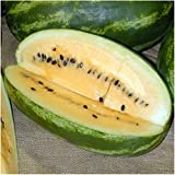 Package of 20 Seeds, Mountain Sweet Yellow Watermelon (Citrullus lanatus) Non-GMO Seeds by Seed Needs Photo, bestseller 2018-2017 new, best price $3.65 review