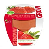 Strawberry Mini Grow Pot Kit Plant Seeds Plant Outdoor & Indoor Photo, bestseller 2018-2017 new, best price $8.99 review