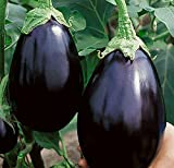 Black Beauty Eggplant Seed - 300 Heirloom Seeds - Non GMO - Neonicotinoid-Free Photo, bestseller 2018-2017 new, best price $7.99 review