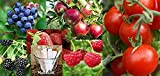 Fruit Combo Pack Raspberry, Blackberry, Blueberry, Strawberry, Apple, Tomato (Organic) 675+ Seeds 650327337305 Self Fertile + 6 Free Plant Markers Photo, bestseller 2018-2017 new, best price $6.99 review