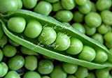 Early Alaska Heirloom Pea 250 Seeds Tender and Sweet Loves cool weather produces abundantly & earlier than most Photo, bestseller 2018-2017 new, best price $4.99 review