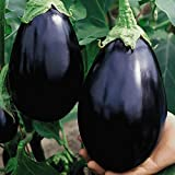 Everwilde Farms - 250 Black Beauty Eggplant Seeds - Gold Vault Jumbo Seed Packet Photo, bestseller 2018-2017 new, best price $2.50 review