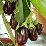Eggplant Ophelia F1 - Vegetable Seeds - Aprox. 50 Seeds Photo, bestseller 2018-2017 new, best price $7.65 review