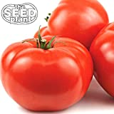 Beefsteak Tomato Seeds - 250 Seeds Non-GMO Photo, bestseller 2018-2017 new, best price $1.85 review