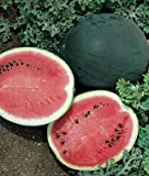 Jayseeds™ Organic Non-GMO Sugar Baby Watermelon Seeds 120 Seeds UPC 643451295559 + 1 Free Plant Marker Photo, bestseller 2018-2017 new, best price $5.99 review