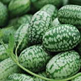 Mexican Miniature Watermelon Seeds ► Organic 'Cucamelon' Mini Sour Gherkin Seeds (15+ Seeds) ◄ by PowerGrow Systems Photo, bestseller 2018-2017 new, best price  review