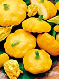 Mouse over image to zoom Details about COURGETTE PATISSON SUMMER SQUASH SUNBURST YELLOW PATTY PAN 10 ORGANIC seeds Photo, bestseller 2018-2017 new, best price $9.99 review