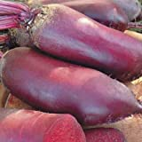 Seeds organic Beetroot Cylinder from Ukraine 3 gram Photo, bestseller 2018-2017 new, best price $1.90 review