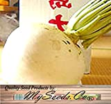 BIG PACK - (250) Japanese Sakurajima Mammoth Radish Carrot Seeds - World Largest 100 lb or More - Non-GMO Seeds by MySeeds.Co (BIG PACK - Sakurajima Mammoth Radish) Photo, bestseller 2018-2017 new, best price $13.95 review