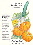 Botanical Interest - Pumpkin Jack Be Little Photo, bestseller 2017-2016 new, best price $1.89 review