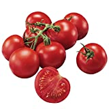 Burpee Fourth of July Tomato Seeds Photo, bestseller 2018-2017 new, best price $6.78 review