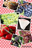 Bulk 4 Grape Vine Seeds Survival Seeds 440 Seeds Upc 650327337435 + 6 Plant Markers Strawberry Seeds Blackberry Seeds (PLUS BONUS 2PACK) Photo, bestseller 2018-2017 new, best price $6.39 review