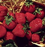 75+ Organic Jewel Strawberry Seeds - DH Seeds - UPC0687299670819 Photo, bestseller 2019-2018 new, best price $5.79 review