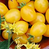 Ildi Tomato 15 Seeds -Yummy Yellow Grape Tomato!- EARLY Photo, bestseller 2018-2017 new, best price $2.99 review