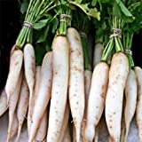 Todd's Seeds Japanese Minowase (Daikon) Radish Heirloom Seed - 10g Packet Photo, bestseller 2018-2017 new, best price $3.99 review