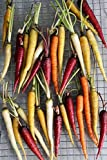 Rainbow Carrot Mix - 500 Seeds - Red, Orange, Yellow, White, and Purple Carrots by RDR Seeds Photo, bestseller 2019-2018 new, best price $2.49 review