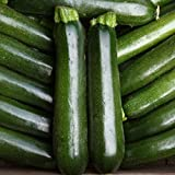 Kings Seeds - Courgette Midnight F1 - 15 Seeds Photo, bestseller 2017-2016 new, best price $3.13 review