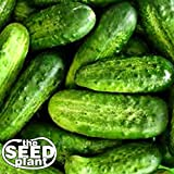 National Pickling Cucumber Seeds - 50 Seeds NON-GMO Photo, bestseller 2018-2017 new, best price $1.95 review