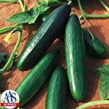 Cucumber Diva F1 Seeds - Vegetable Seeds Package - 500 Seed Package Photo, bestseller 2018-2017 new, best price $13.25 review
