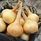 Everwilde Farms - 500 Walla Walla Onion Seeds - Gold Vault Jumbo Seed Packet Photo, bestseller 2018-2017 new, best price $2.50 review