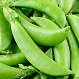 Peas, Sugar Snap Pea Seed, Organic, NON- GMO, 20 seeds per package,◾Green peas are one of the most nutritious leguminous vegetables, rich in health benefiting phyto-nutrients, minerals, vitamins and anti-oxidants. Photo, bestseller 2018-2017 new, best price $4.66 review