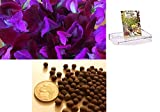 Homegrown Packet Sweet Pea Seeds, 75 Seeds, Scented Purples Sweet Pea Photo, bestseller 2018-2017 new, best price $4.99 review