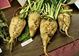 Beet, Sugar Beet,, Make Your Own Sugar, 500 Seeds Groco Photo, bestseller 2018-2017 new, best price $7.89 review