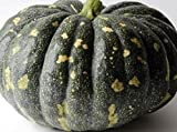 10 seeds Indians Amir,Jamaican Pumpkin Seed (Calabaza) aKaPumpkin Haitian &Cuban Squash Photo, bestseller 2018-2017 new, best price $5.95 review