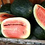 David's Garden Seeds Fruit Watermelon Black Diamond Yellow Belly KW6566 (Red) 50 Heirloom Seeds Photo, bestseller 2018-2017 new, best price $9.45 review