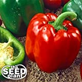 Keystone Resistant Sweet Bell Pepper Seeds 150 SEEDS NON-GMO Photo, bestseller 2019-2018 new, best price $1.39 review