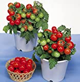 30+ ORGANICALLY GROWN Dwarf Red Robin Tomato Seeds, Heirloom NON-GMO, Sweet, Low Acid, Determinate, Open-Pollinated, Delicious, From USA Photo, bestseller 2018-2017 new, best price $2.65 review