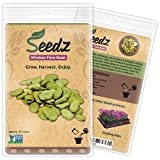 CERTIFIED ORGANIC SEEDS (Appr. 30) - Windsor Fava Bean Seeds - Open Pollinated Vegetable Seeds - Organic, Non Hybrid Garden Seeds - USA Photo, bestseller 2019-2018 new, best price $9.99 review