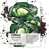 Seed Needs, Early Flat Dutch Cabbage (Brassica oleracea) 300 Seeds Non-GMO Photo, bestseller 2019-2018 new, best price $3.65 review