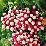 Everwilde Farms - 500 French Breakfast Radish Seeds - Gold Vault Jumbo Seed Packet Photo, bestseller 2018-2017 new, best price $2.50 review