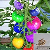 BigFamily 100pcs very rare imported rainbow tomato Seeds bonsai fruit & vegetable seeds Non-GMO Potted plants for home garden Photo, bestseller 2018-2017 new, best price $2.00 review