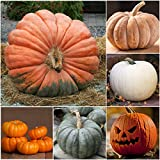 Package of 50 Seeds, Spooky Pumpkin Mixture (Cucurbita pepo / maxima) Non-GMO Seeds by Seed Needs Photo, bestseller 2018-2017 new, best price $3.65 review