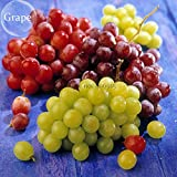New Mixed Grape Vitis Vinifera Vine Delicious Fresh Fruit, 15+ seeds Photo, bestseller 2018-2017 new, best price $5.08 review