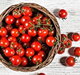 Organic Matt's Wild Cherry Tomato Seeds - 2 SEED PACKETS! - Over 100 Heirloom Non-GMO USDA Organic Seeds Photo, bestseller 2018-2017 new, best price $6.97 review
