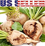 50+ ORGANICALLY GROWN Sugar Beet Seeds, Heirloom NON-GMO, Beta vulgaris, Sweet, White, Cold Tolerant, Delicious, Great for Northern Areas. From USA Photo, bestseller 2018-2017 new, best price $2.59 review