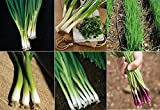 David's Garden Seeds Collection Set Bunching Onion RSL346 (Multi) 6 Varieties 2400 Seeds (Open Pollinated, Heirloom, Organic) Photo, bestseller 2018-2017 new, best price $19.45 review